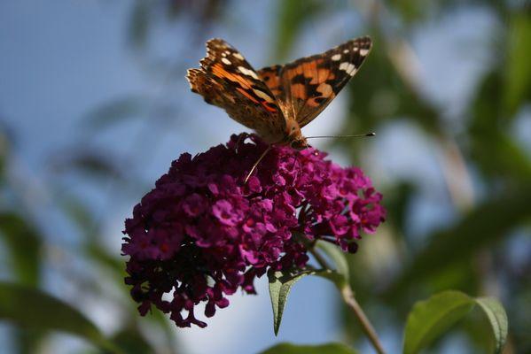 Frei wie ein Schmetterling....