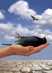frei... wie ein Vogel