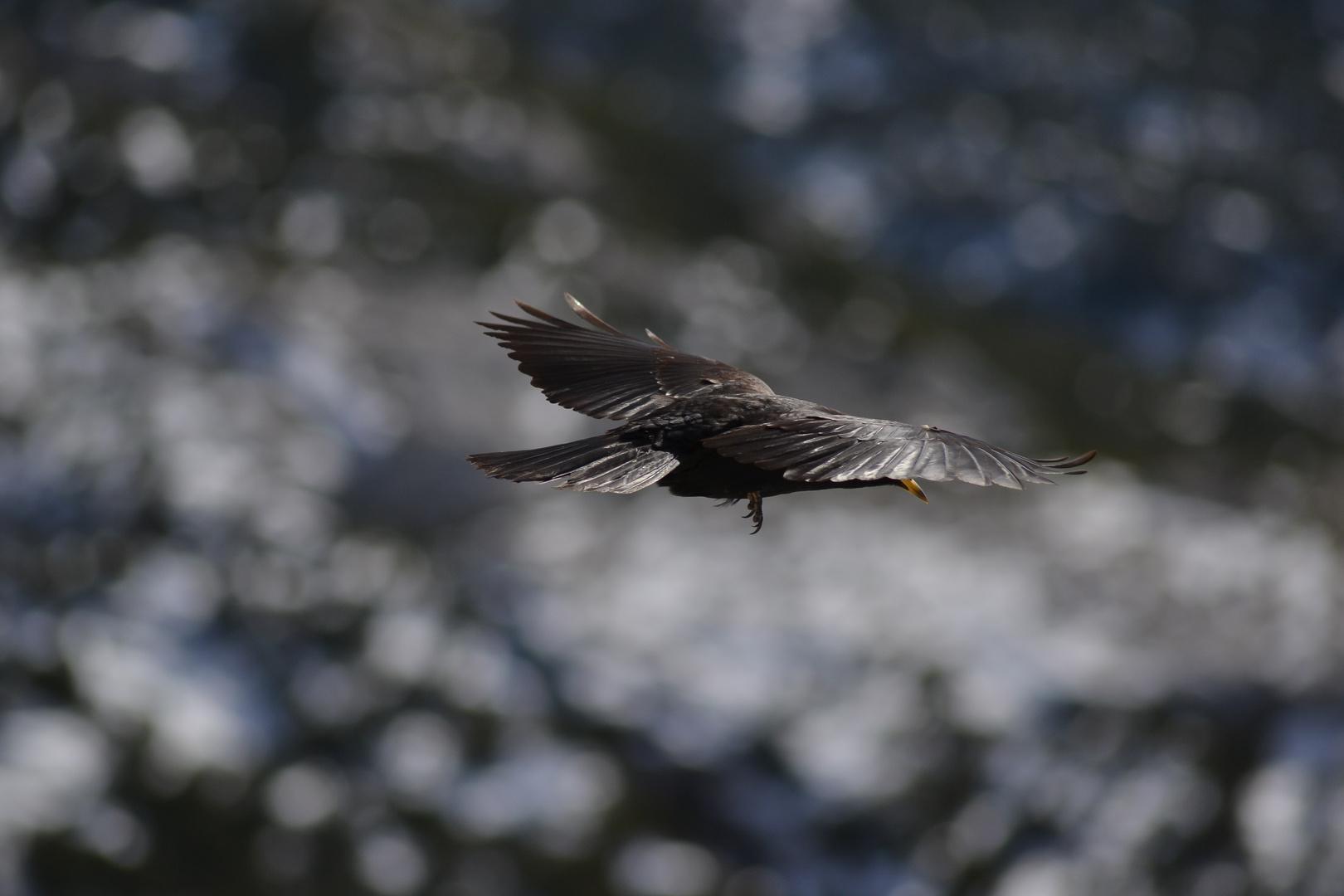 Frei wie ein Vogel