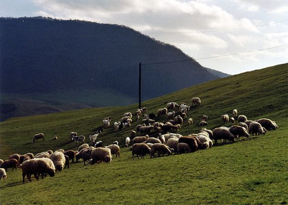 Freie Tiere in Rumänien