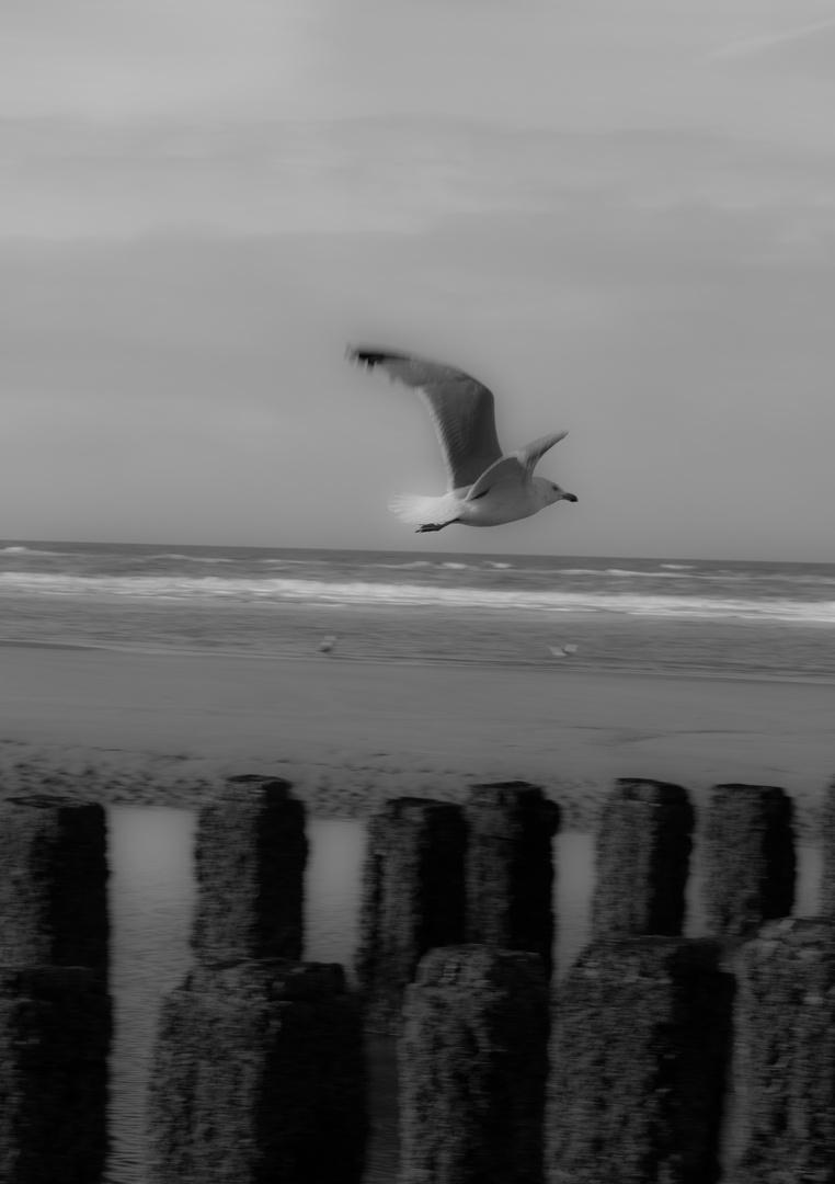Freiflug