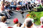 Freiflugshow Walsrode Vogelpark
