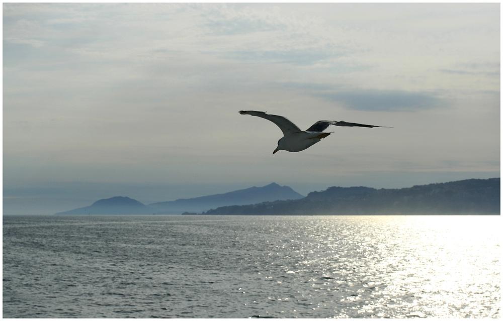 Freiheit...