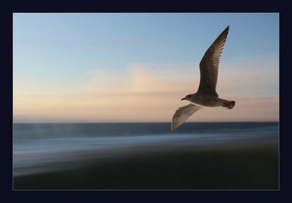 Freiheit ...