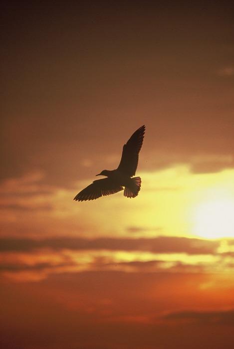 Freiheit ist kein Traum
