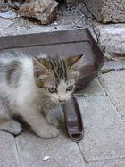 Freilaufende Katze in Griechenland