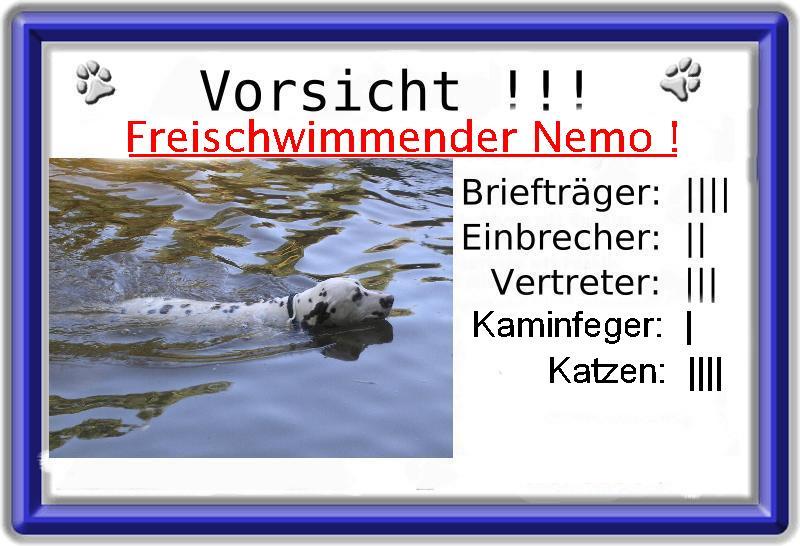 Freischwimmender Nemo