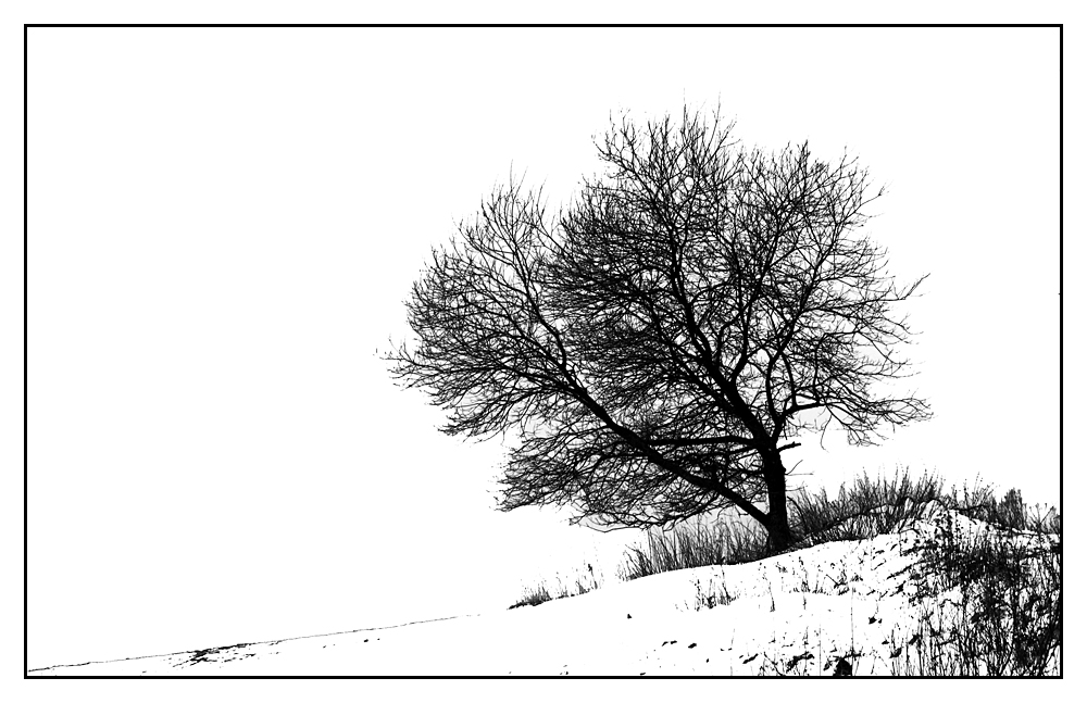 freistehender Baum II