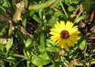 Freitag, 13.1. - in meinem Garten