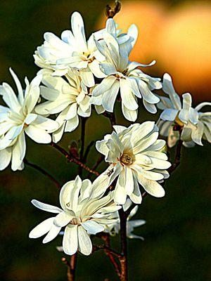 Freitagsblümchen.....