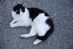 Fremde Katze auf Stein