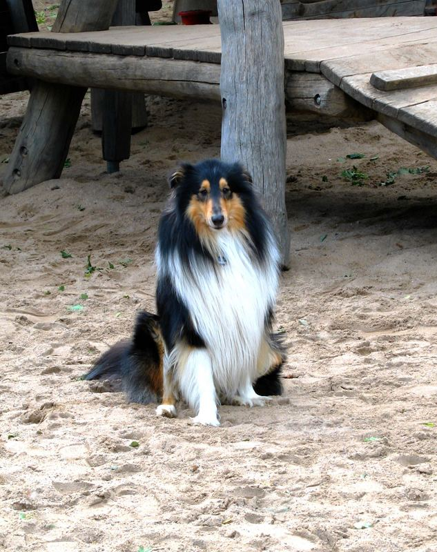 fremder Hund