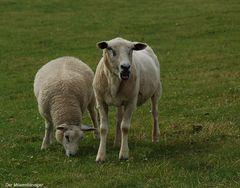 Fressen Vegetarier den Tieren das Futter weg ???