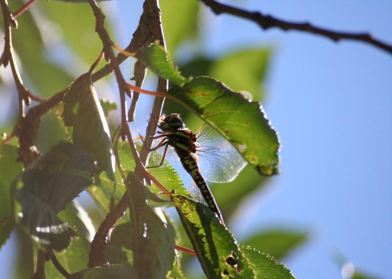 Fresspause im Baum
