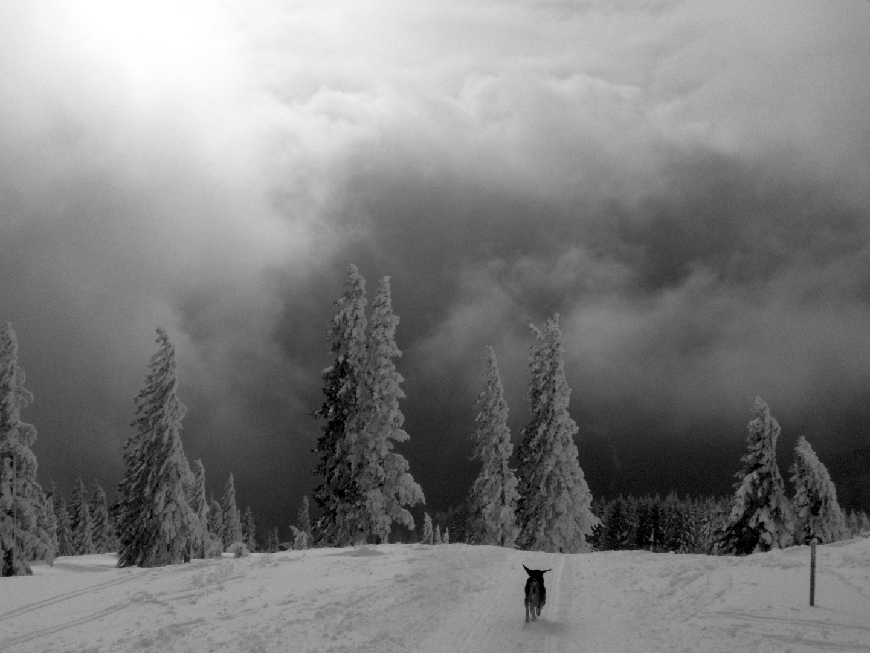 Freude am Schnee