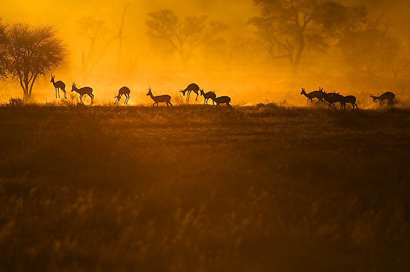 Freude - Gelb - Kalahari