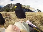 Freund der Bergwanderer