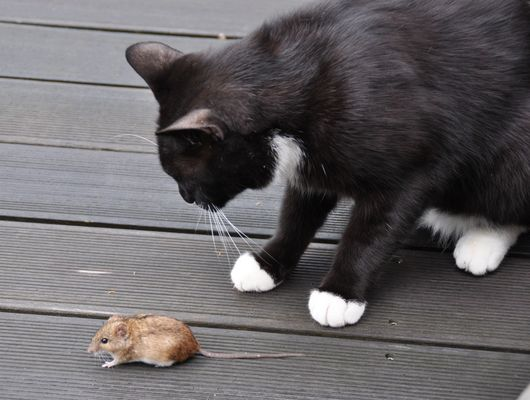 Freunde oder Feinde?
