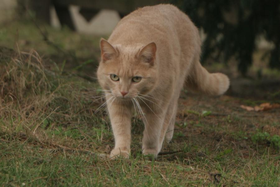 Freundliche Katze