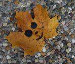 Freundliches Herbstblatt ;-)