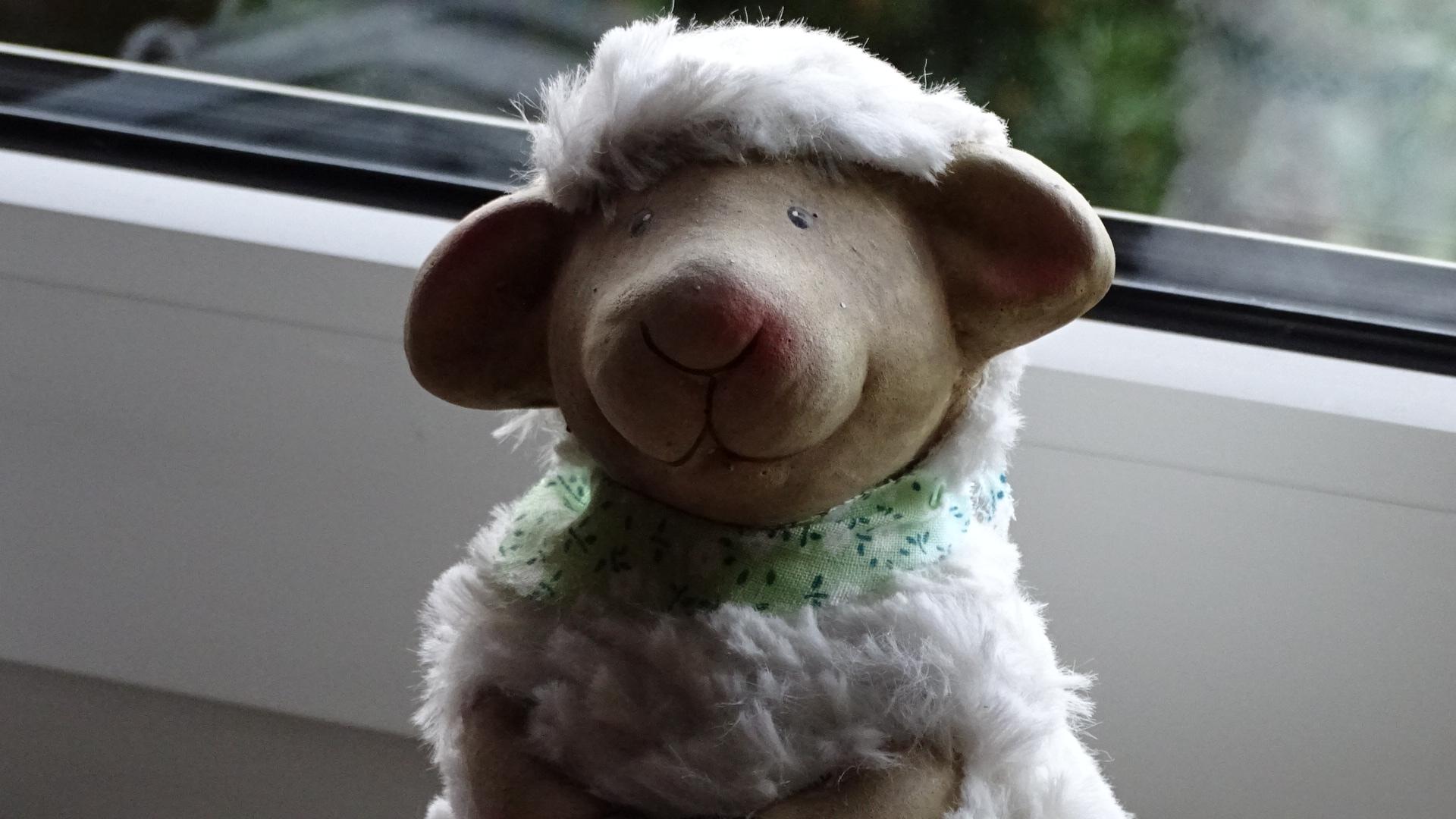 Freundliches Schaf mit philosophischem Blick