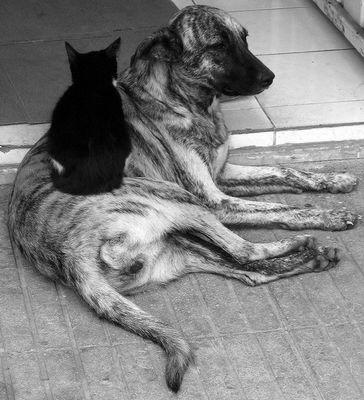 Freundschaft der Feinde