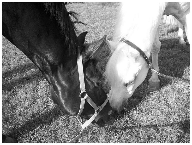 Freundschaft in schwarz-weiß
