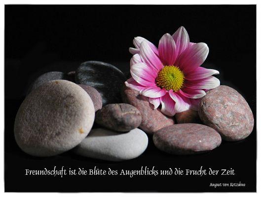 Freundschaft ist die Blüte...