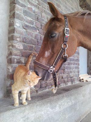 Freundschaft :o)
