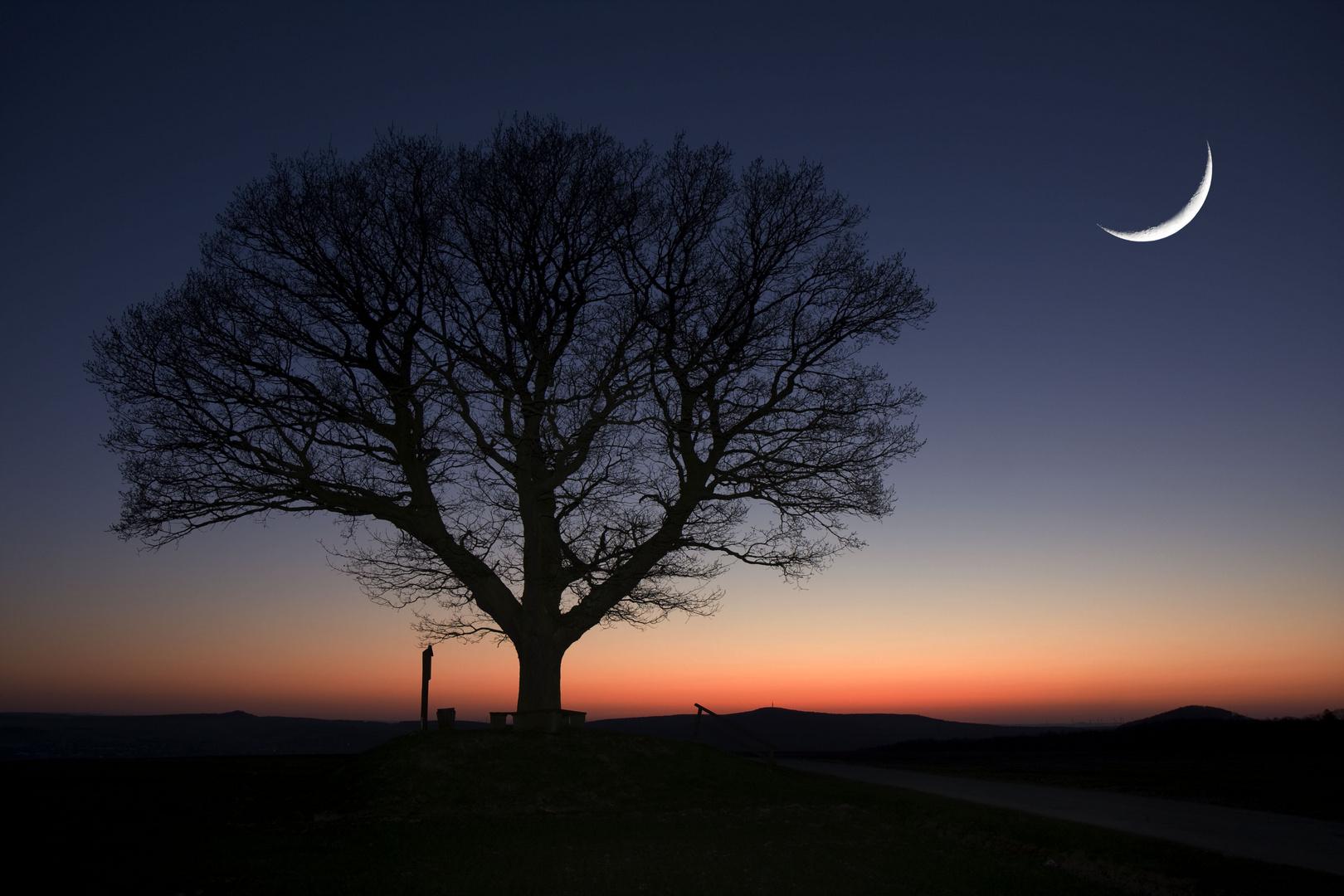 Friedenseiche bei Nacht