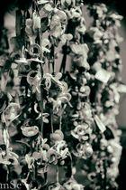 Friedhof der Nuckeltiere...
