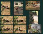 Friedhofseichhörnchen