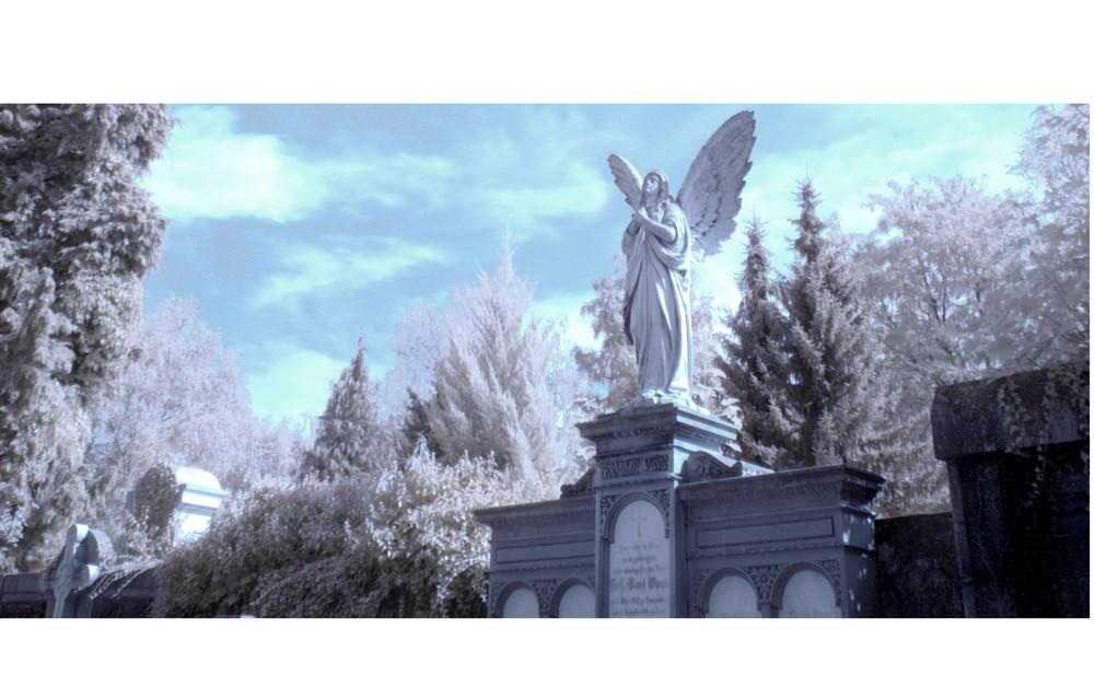 Friedhofsengel infrarot