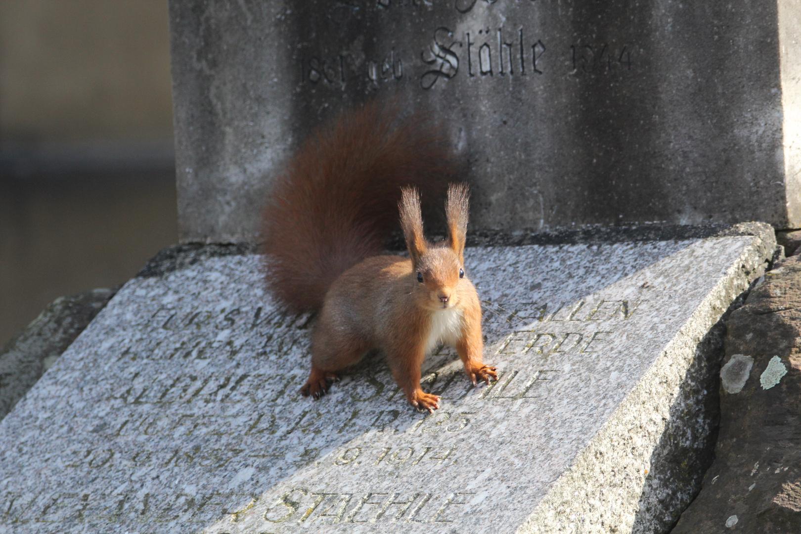 Friedhofshörnchen