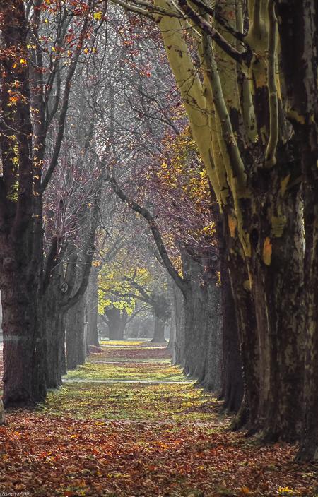 Friedhofsweg,....