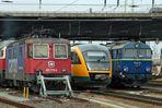 Friedliche Koexistenz auf dem Bahnhof Cottbus