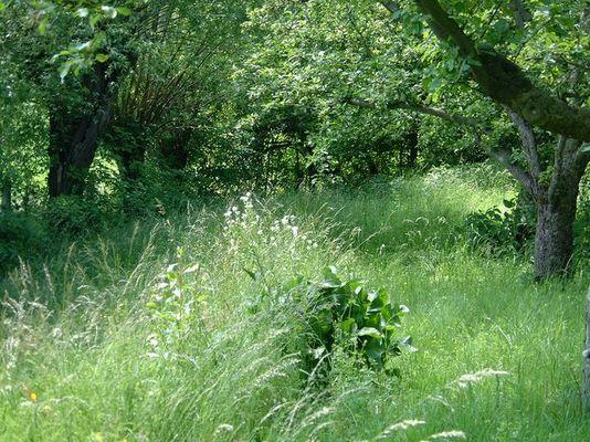 friedvoll grüne Oase in Dunkler Zeit