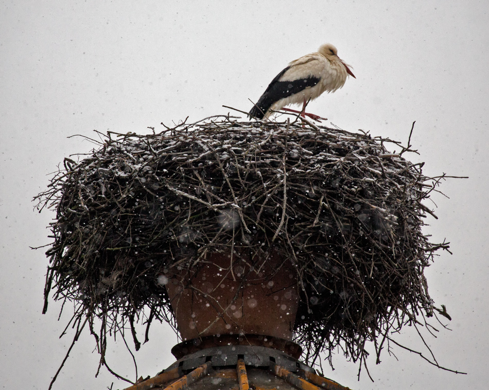 Frierender Storch!