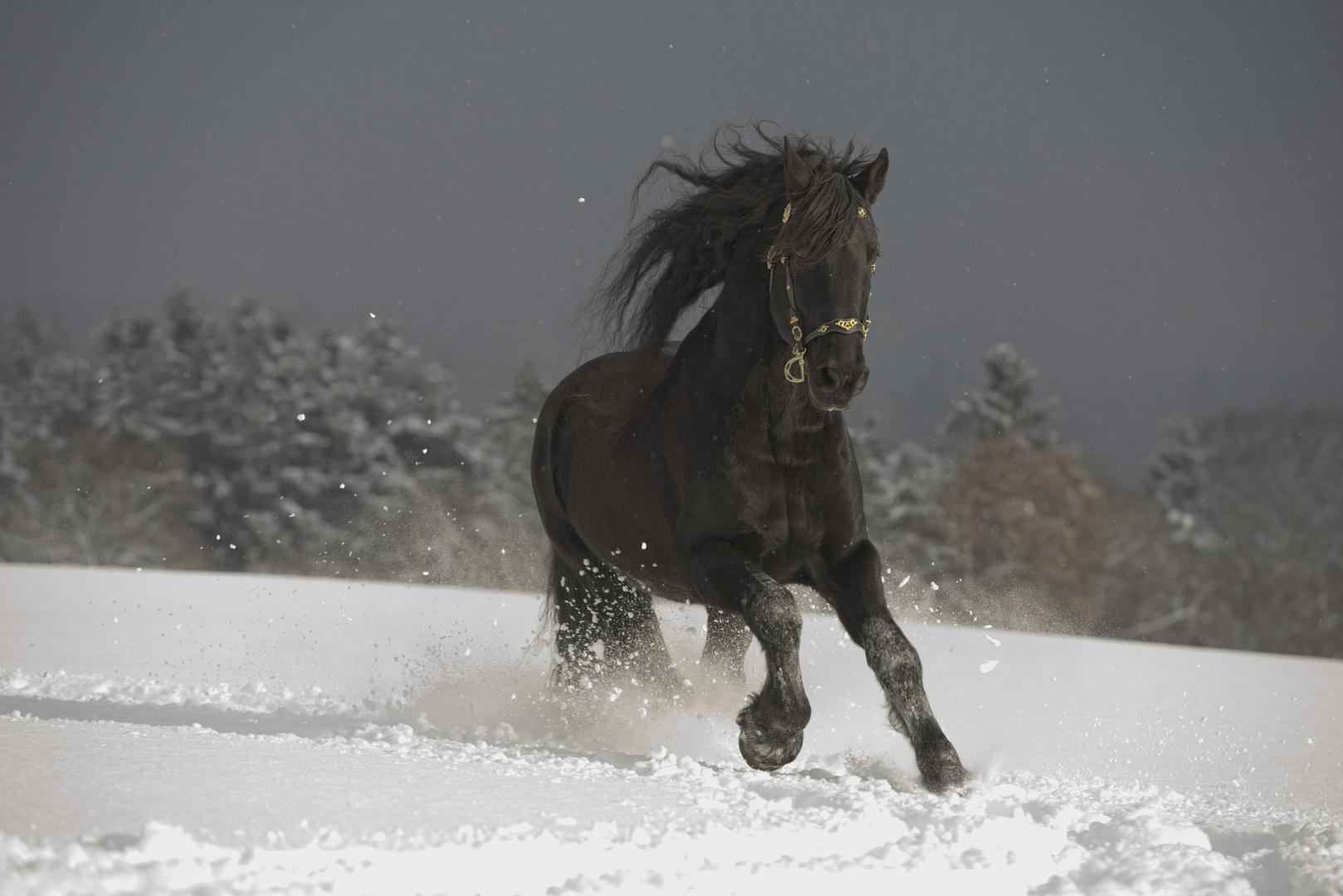 Friese im Schnee