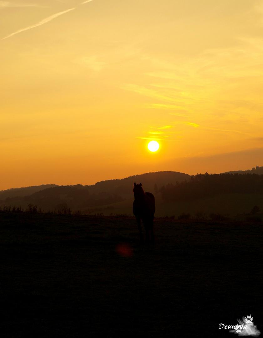 Friese im Sonnenuntergang...