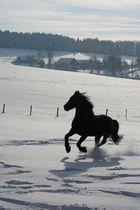 Friese im verschneiten Sauerland
