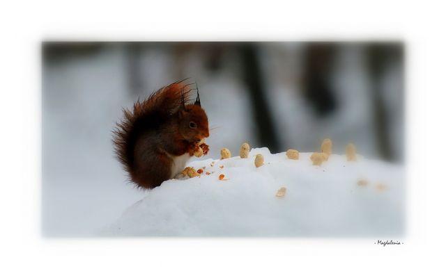 Fringale hivernale