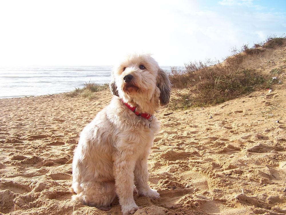 fripouille a la plage 2