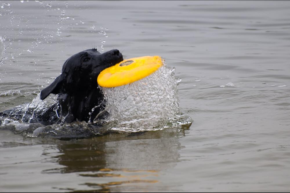 Frisbee im Wasser