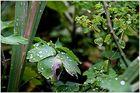 Frisch auf die Blätter