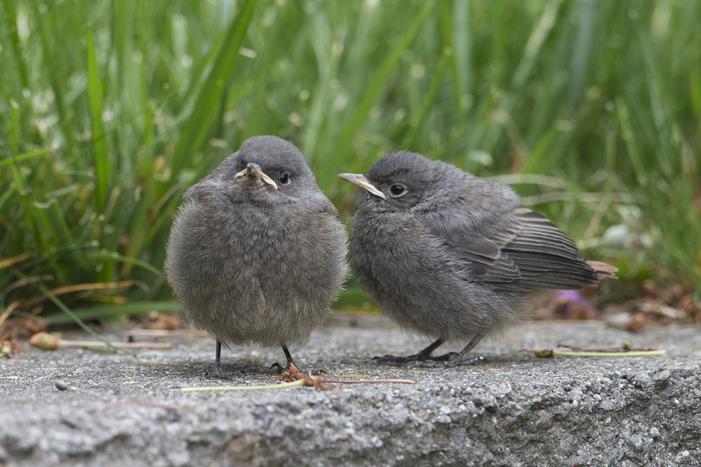 Frisch aus dem Nest