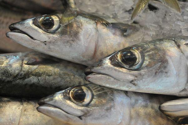 Frisch Fisch (2)
