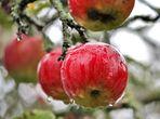 frisch gewaschenes Obst