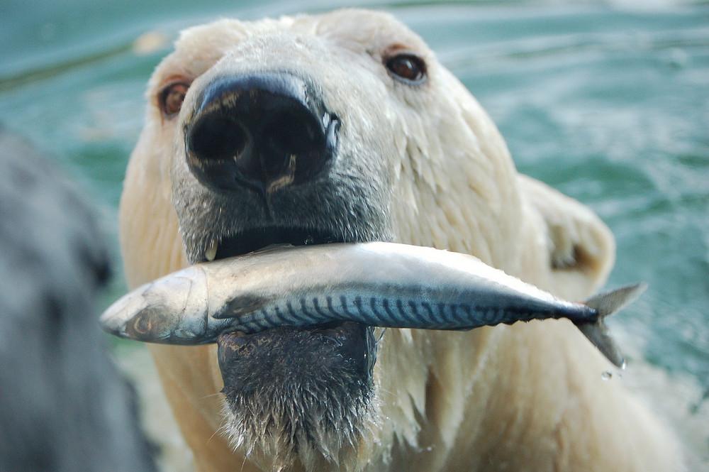 Frisch vom Fischmarkt...