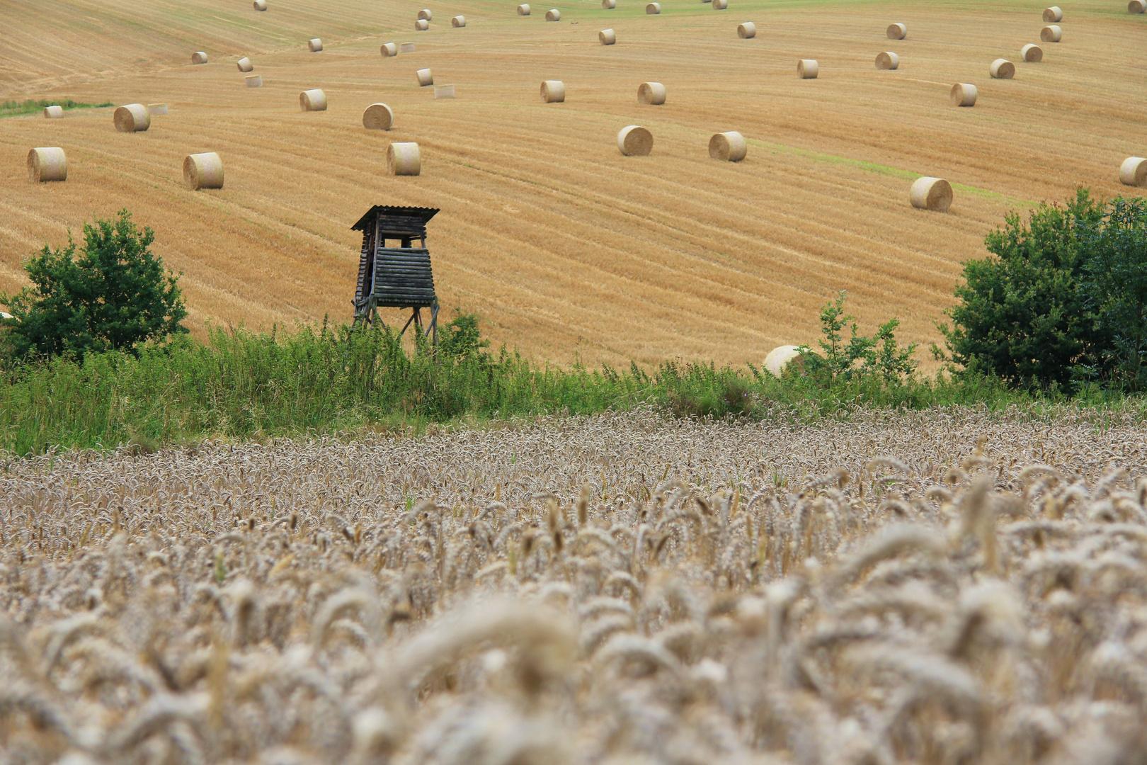 Frische Ernte in Niederbayern